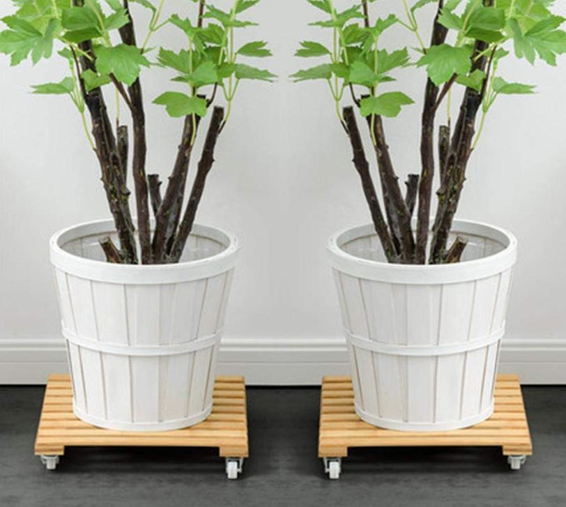 soportes plantas