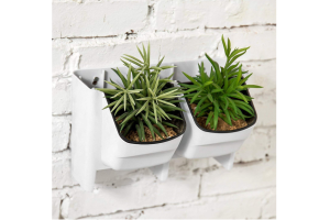 colgar plantas pared