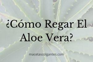 ▷ ¿Cómo Regar el Aloe Vera? 🥇【GUÍA DEFINITIVA 2021】