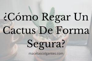 ▷ ¿Cómo Regar Un Cactus? 🥇【SECRETOS PRO】